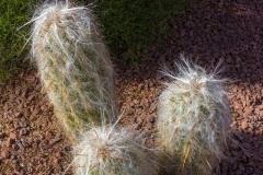 hoa-community-landscaping-tucson01