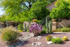 hoa-community-landscaping-tucson13