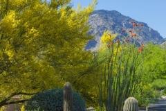 hoa-community-landscaping-tucson15