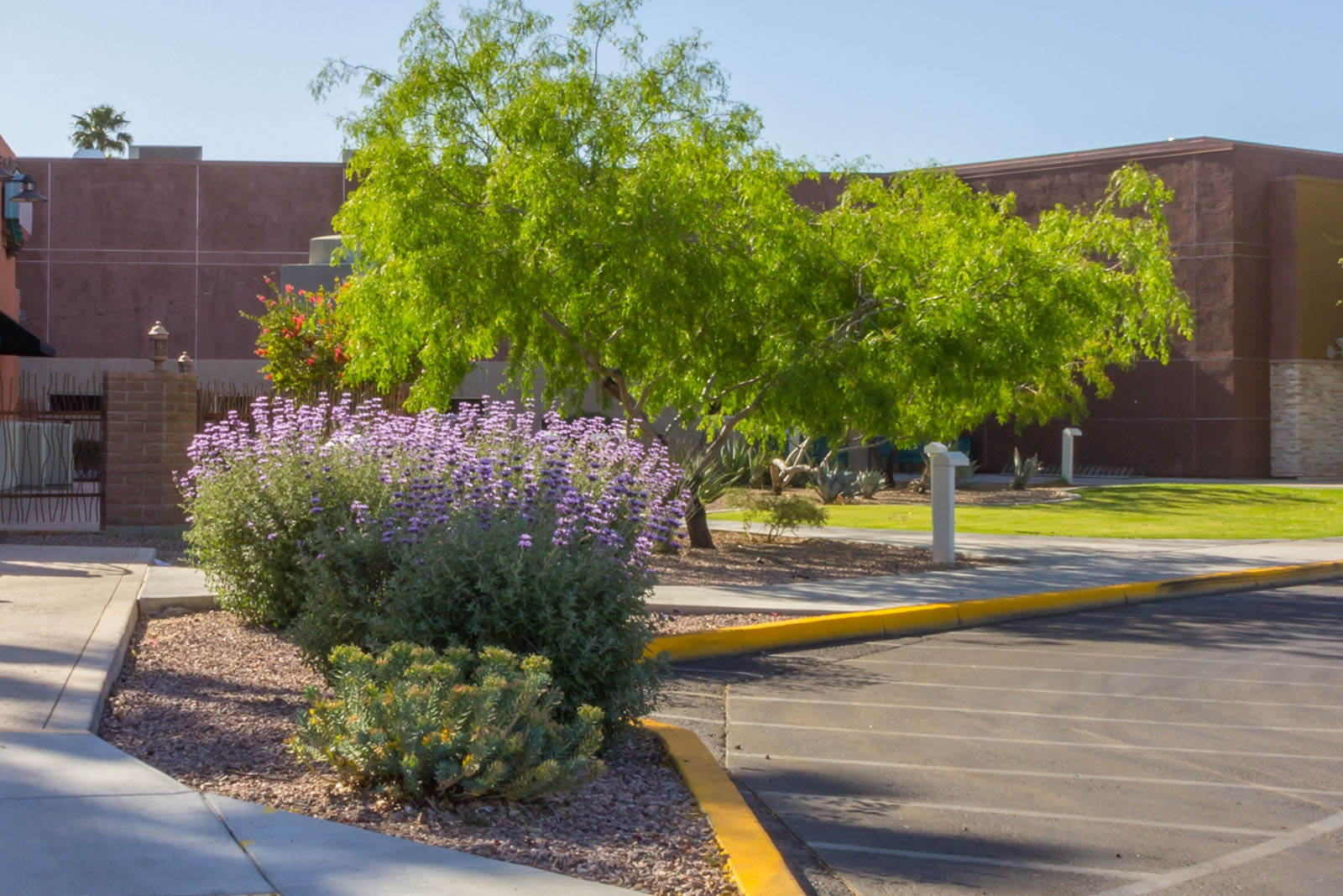 mall-landscape-maintenance-tucson08