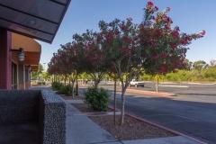 mall-landscape-maintenance-tucson11